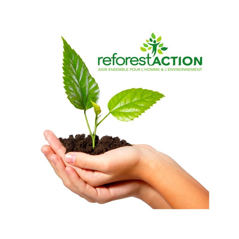 1-arbre-plante-avec-reforest-action